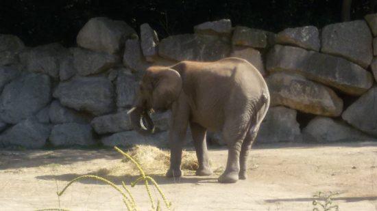 DA_TGS_Elefant